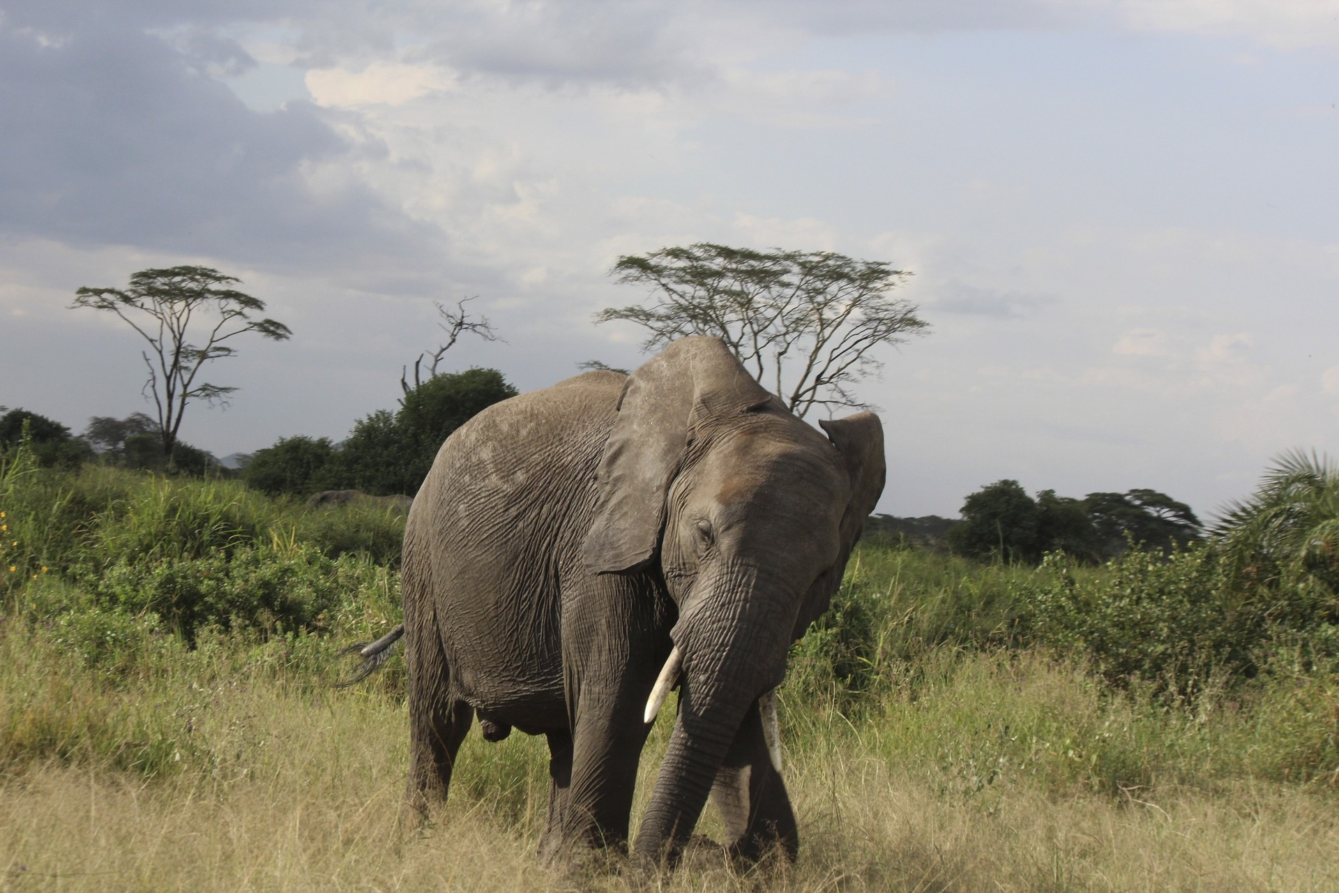 elephant-1127183_1920