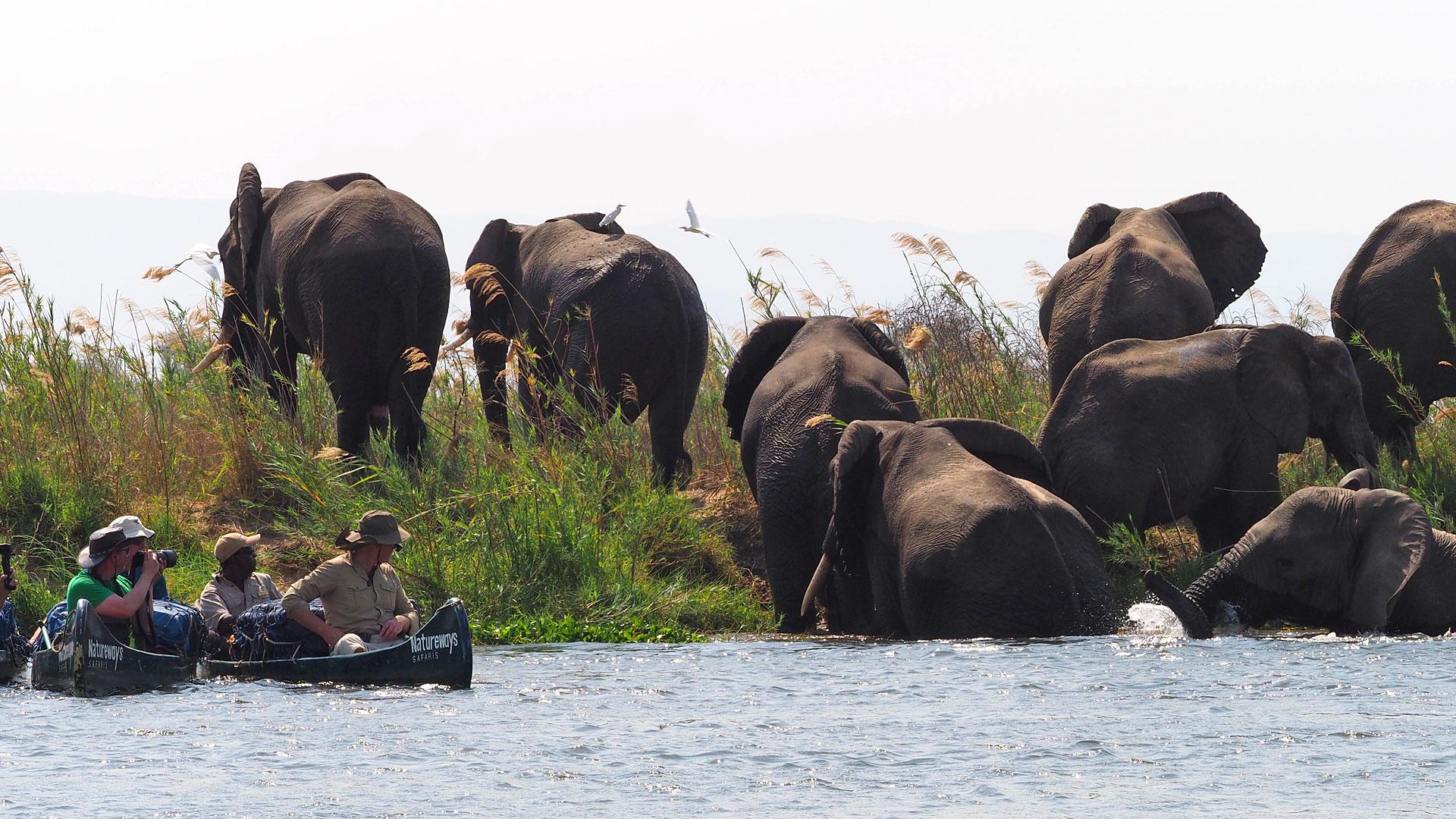 zambezi (3)
