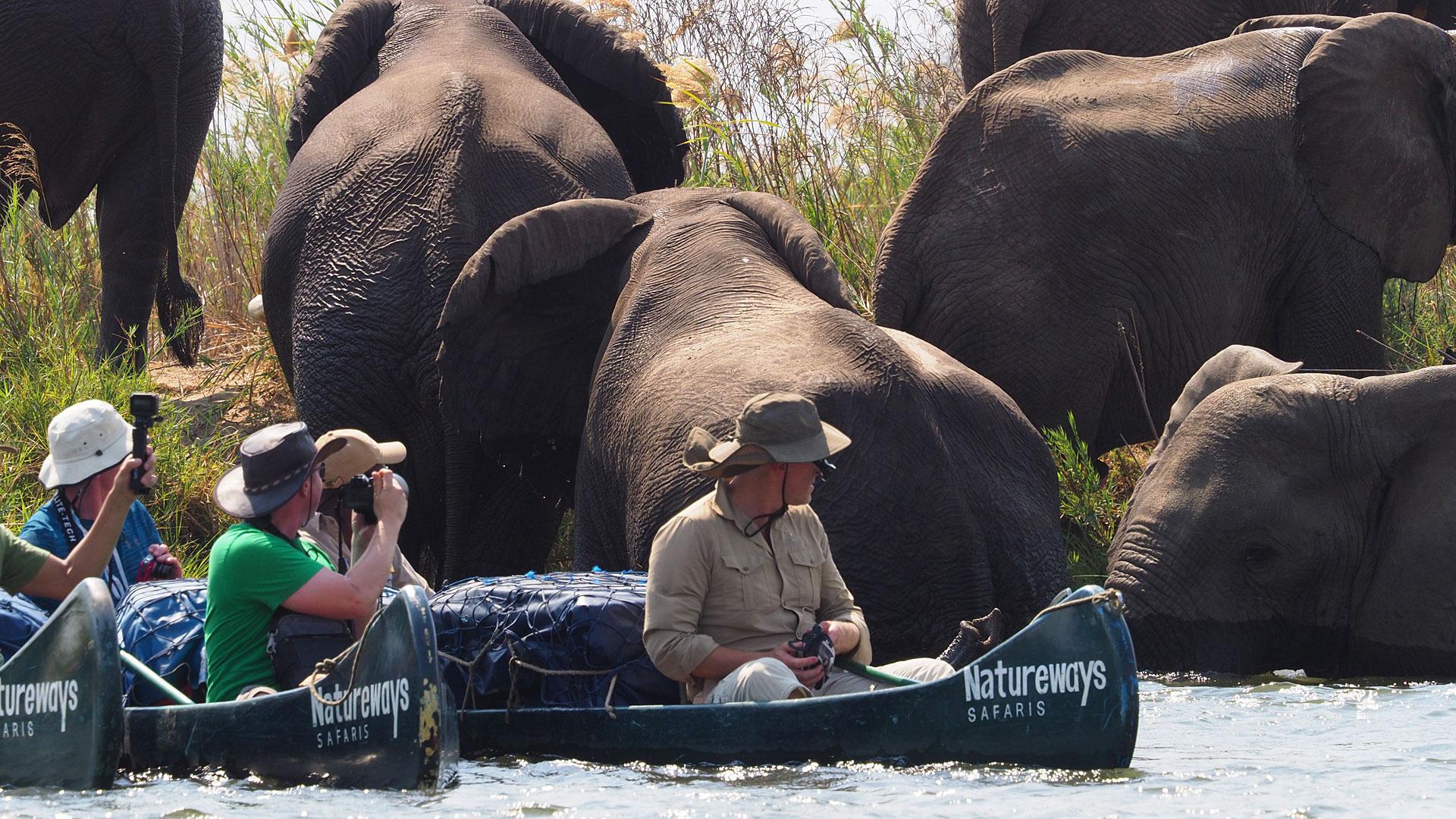 zambezi (4)