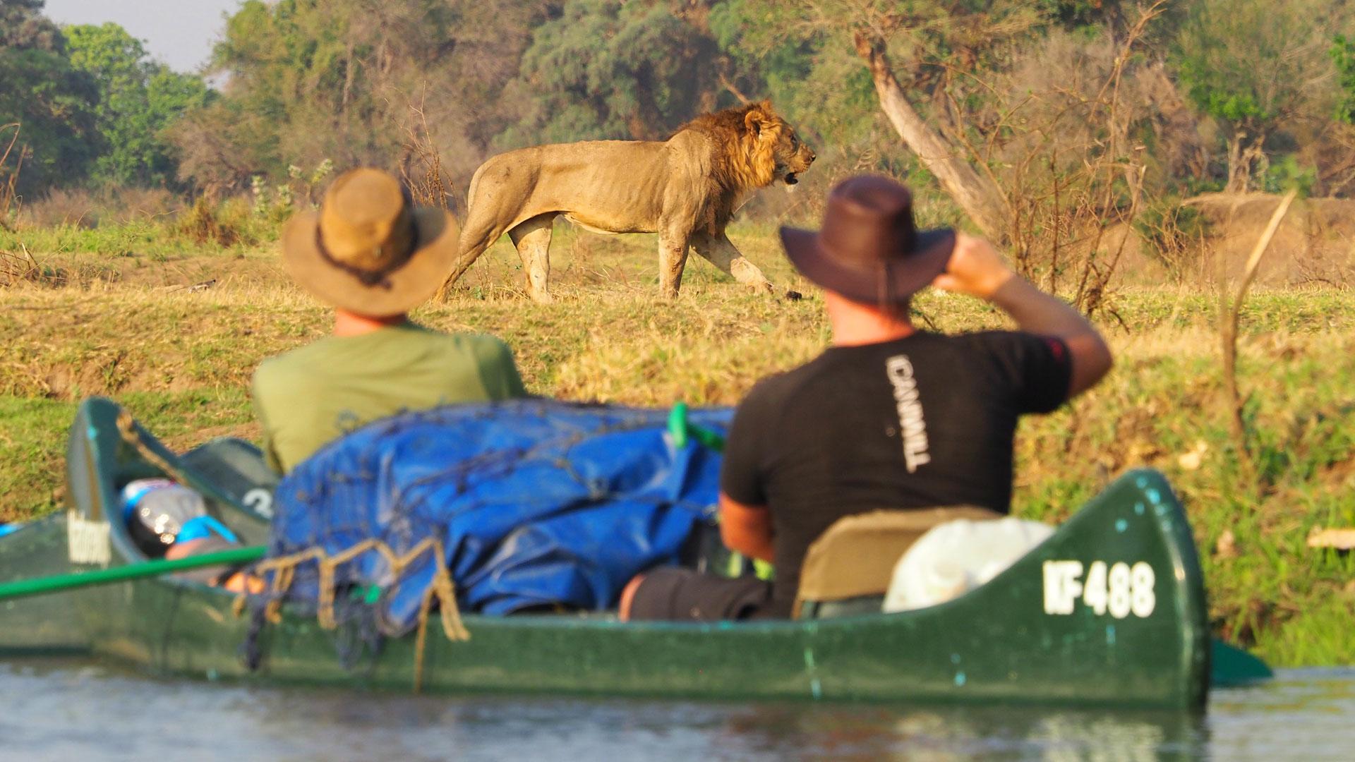 zambezi (5)