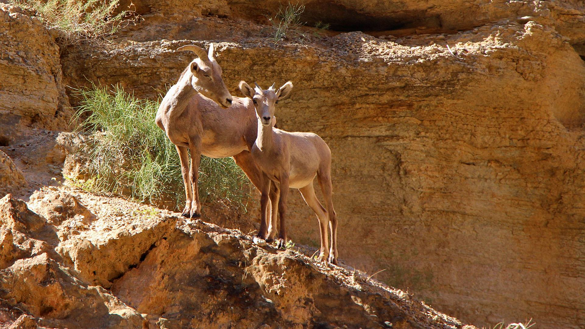 expeditionsresor grand canyon (11)